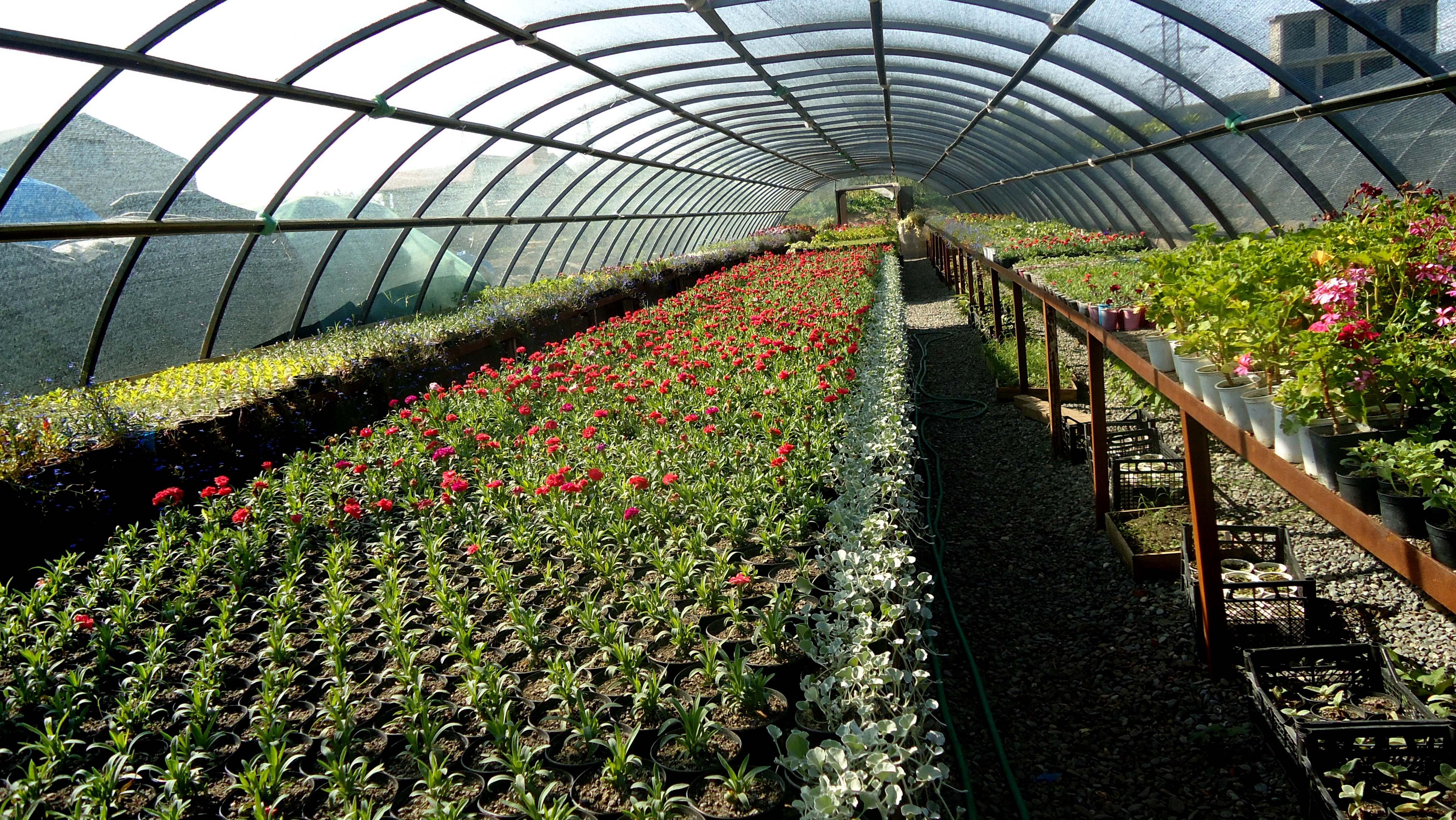 shevardnadze gardenia